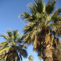 Пальмы.. :: Зинаида