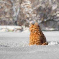 Эх,думы мои. Ладно,мороз и солнце день чудесный... :: Евгений Воропинов