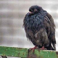 Птичий грипп... :: barsuk lesnoi
