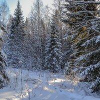подморозил январь :: сергей