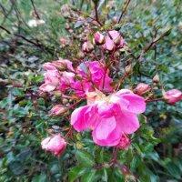 Цветы запоздалые :: veera (veerra)