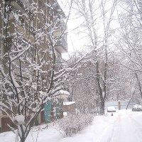 Снежным днем :: Елена Семигина