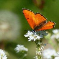 опять про бабочек 10 :: Александр Прокудин