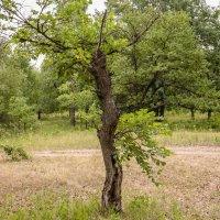 Дерево-девушка :: Олег