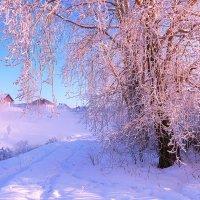 Мороз и солнце; день чудесный! :: Сергей l