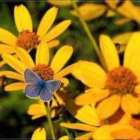 Голубяночка на цветах. :: Anatol L