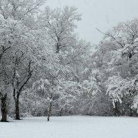 просто зима :: Геннадий Титов