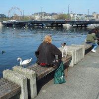 Полдень на набережной Цюрихского озера :: Alm Lana