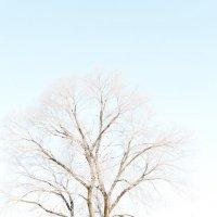 дерево :: Максим Иванов