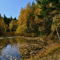 Осенний пруд :: Татьяна Соловьева