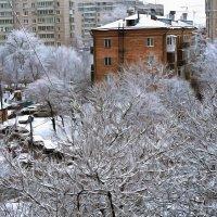Редкий теперь вид за окном :: Алексей Виноградов