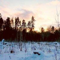 Закат над лесом :: Raduzka (Надежда Веркина)