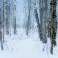 Зимний лес :: Виктор К