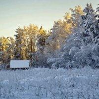 У леса на опушке жила зима в избушке... :: Татьяна Н.