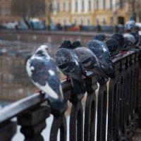 Февраль в Питере :: Алексей Корнеев