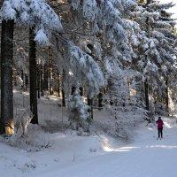 Мои зимние прогулки :: tamara *****