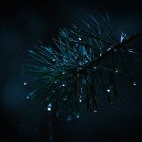 Moonlight :: Роман Самарский