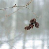 зимние прогулки :: Сергей Бойцов
