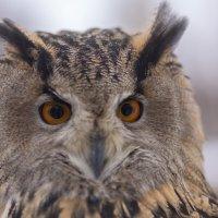 Посмотри в мои глаза :: Светлана Карнаух
