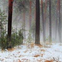 Февраль весенним задышал туманом... :: Лесо-Вед (Баранов)
