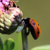Из жизни насекомых :: Екатерина К.