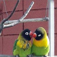 Любовь! :: Варвара