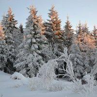 В зимнем лесу :: tamara *****