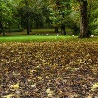 Ковёр из желтых листьев :: Alexander Andronik