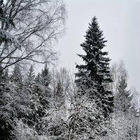 Расцвела зима  … :: Юрий
