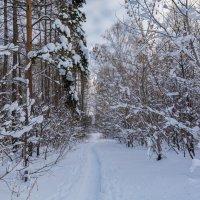 Заснеженный лес :: Любовь Потеряхина