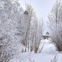 Зимний день. :: Наталья