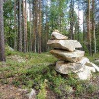 Северный лес :: Денис Бочкарёв
