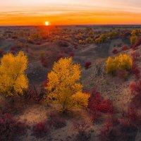 Осень на песчаных бурунах :: Фёдор. Лашков