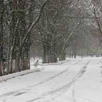 По зимнему пути :: mAri