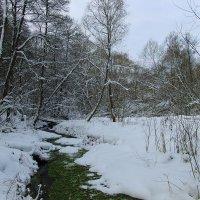 Зимний лес. :: Инна Щелокова