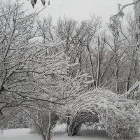 После снегопада :: Галина