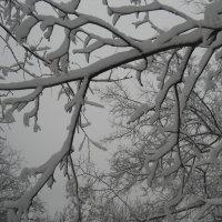 Снежные узоры :: Галина