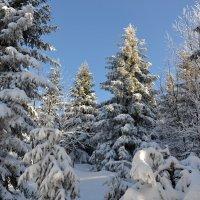 Морозный зимний день :: tamara *****