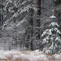 Успокоился нежданный снегопад... :: Лесо-Вед (Баранов)
