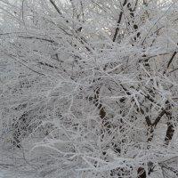 Зима-краса :: Галина