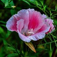цветы августа :: gribushko грибушко Николай