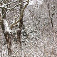 Зимний лес :: mAri