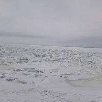 Финский залив 08022020 :: Митя Дмитрий Митя