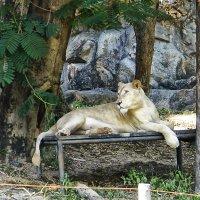 В зоопарке города Чианг Май. Таиланд. :: Alex
