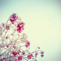 Рябины гроздья алые... :: Домника Галкина