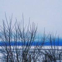 Зимние будни природы :: Домника Галкина