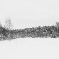 Зимний лес :: Денис Бочкарёв