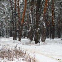 Осторожным снегопадом пахнут солнце... :: Лесо-Вед (Баранов)