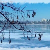 Голубой февраль. :: Зоя Чария