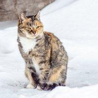 ...по имени Кошка :: Андрей Щетинин